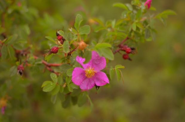 DSC_3995flowers