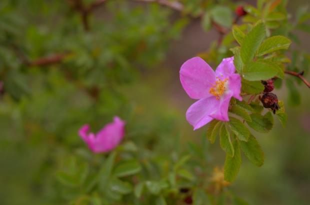 DSC_4003flowers