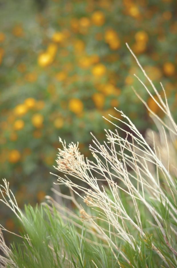 DSC_4013flowers