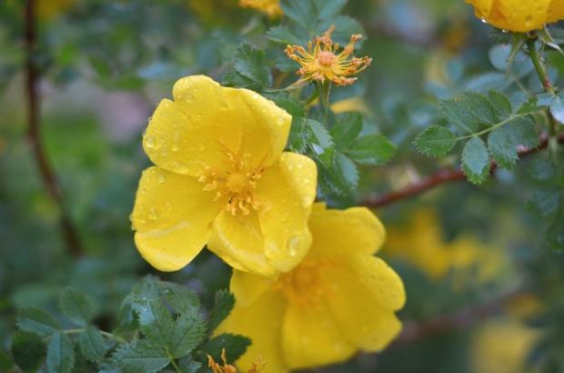 DSC_4027flowers