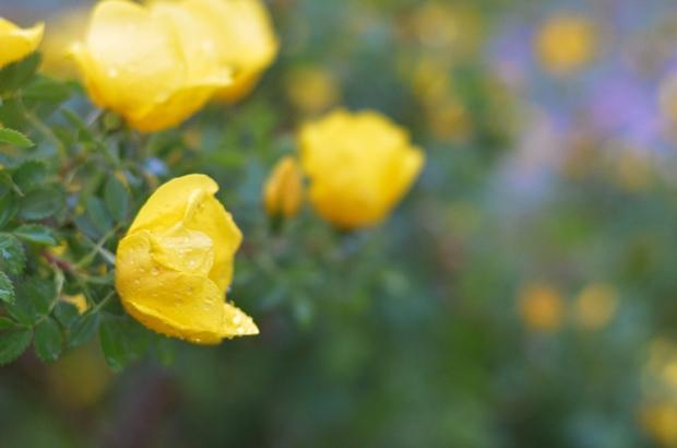 DSC_4028flowers