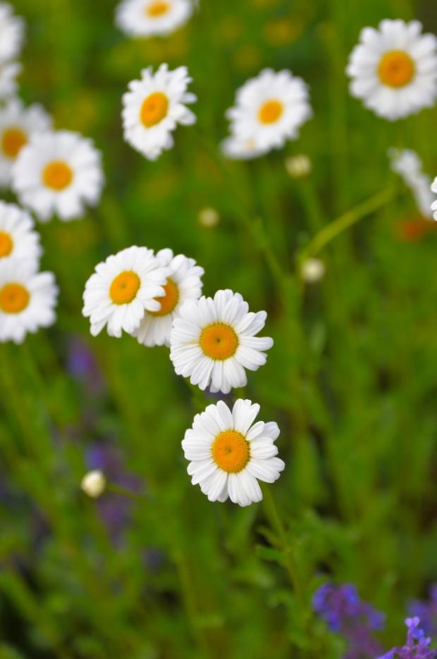 DSC_4179flowers