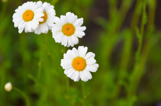 DSC_4191flowers