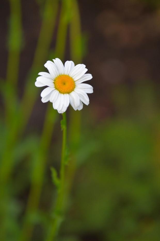 DSC_4200flowers