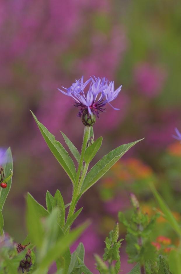 DSC_4238flowers
