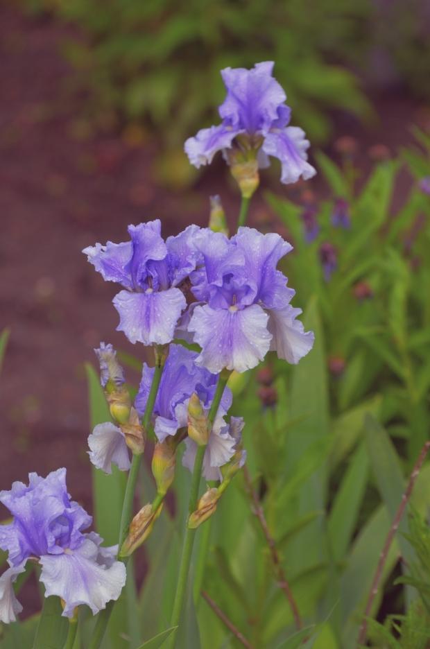 DSC_4258flowers