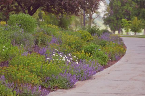 DSC_4294flowers
